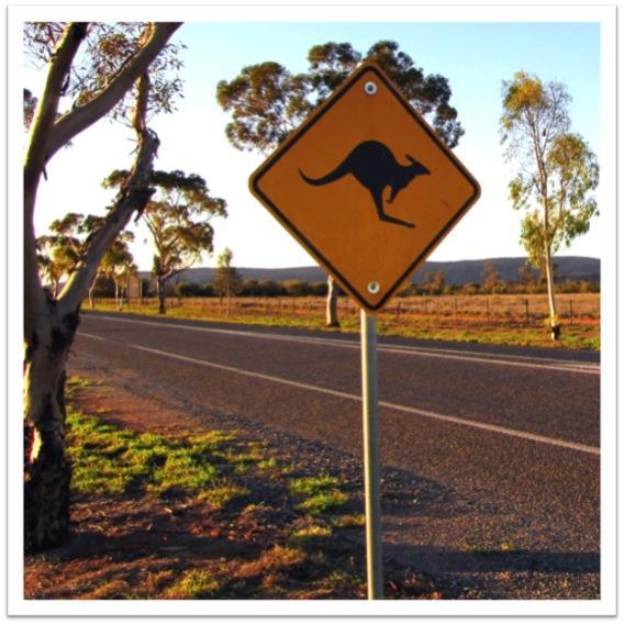 Street sign with Kangaroo