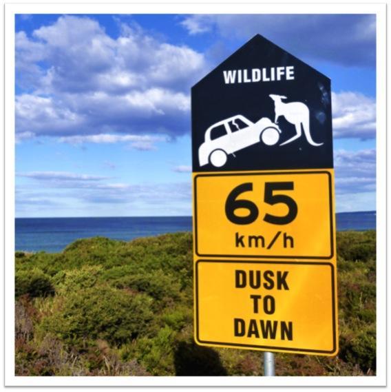 Road sign with Kangaroo
